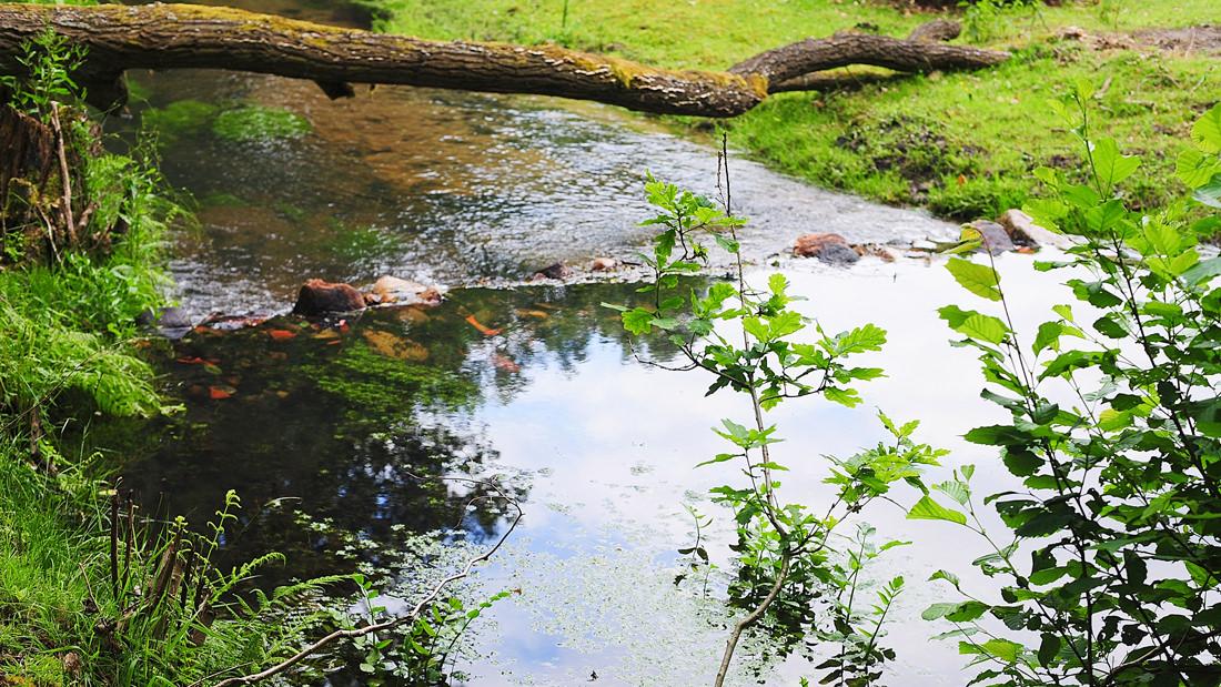 Wir schätzen das Umfeld in dem wir leben und setzen auf Nachhaltigkeit und langfristige Werte